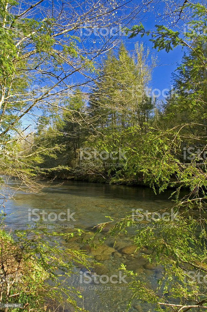 Little Pigeon River, Spring, Great Smoky Mtns NP, TN royalty-free stock photo