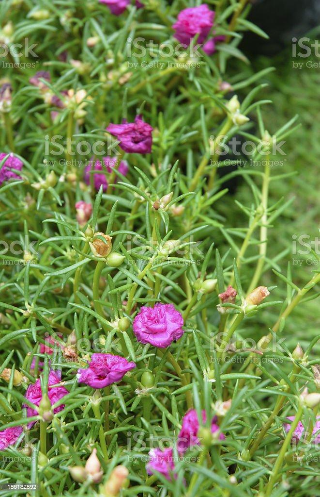 little pink flower stock photo
