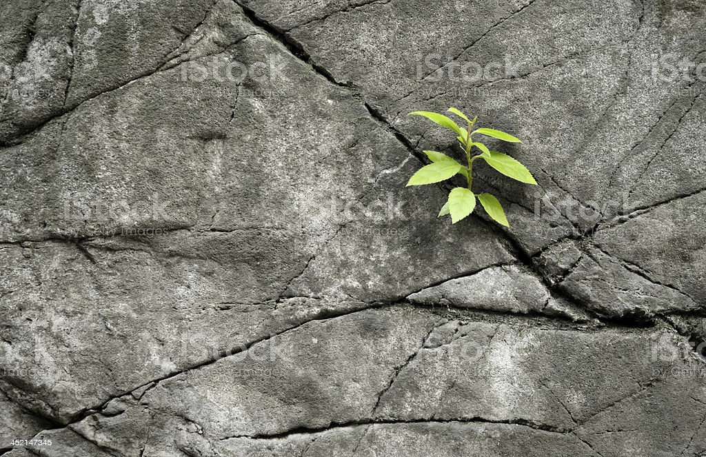 little plant growth in rock stock photo