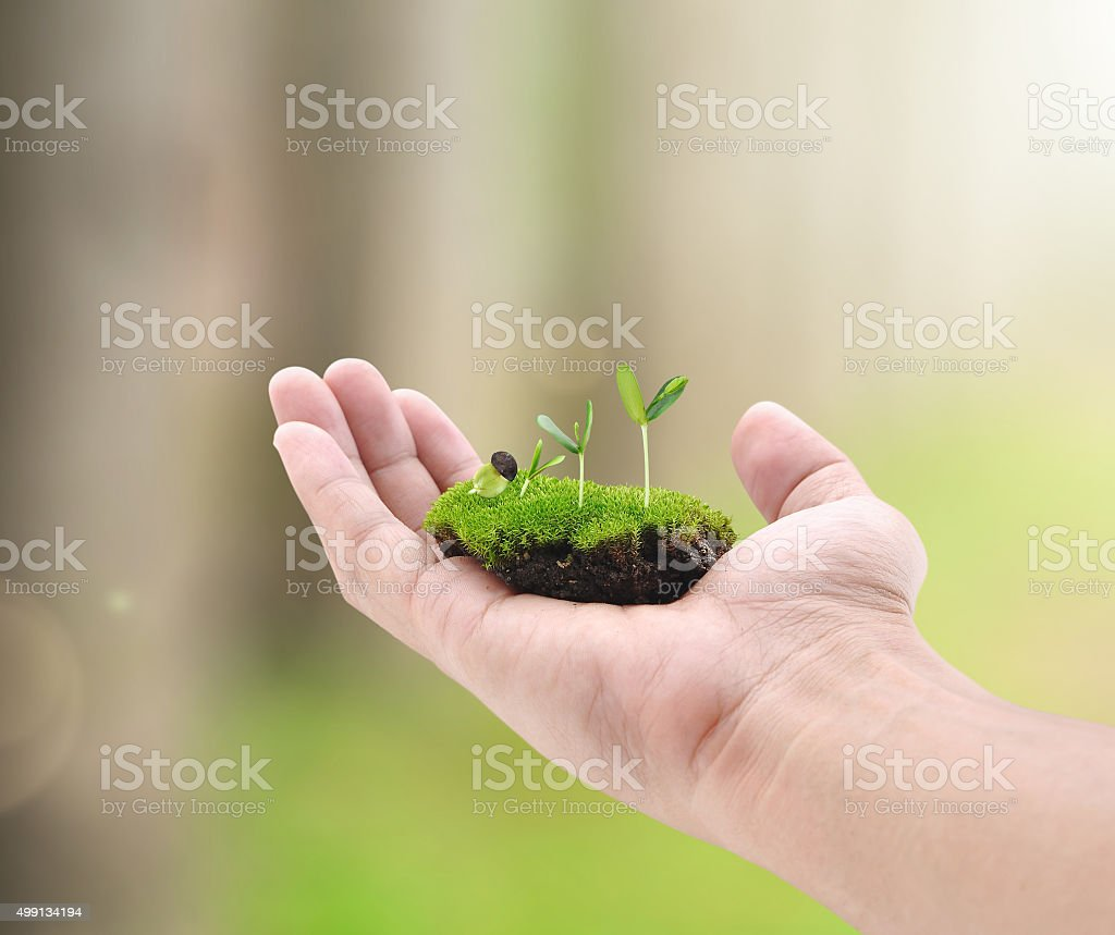 Little plant on hand on bokeh background stock photo