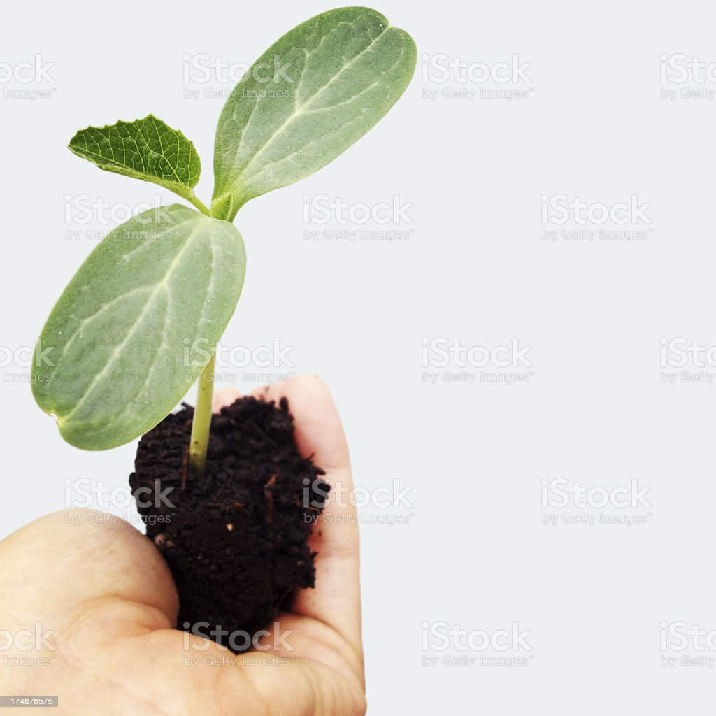 Little Plant stock photo
