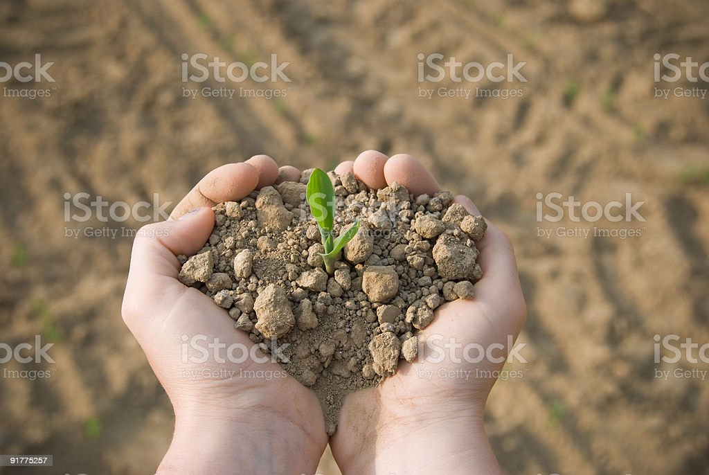 Little plant royalty-free stock photo