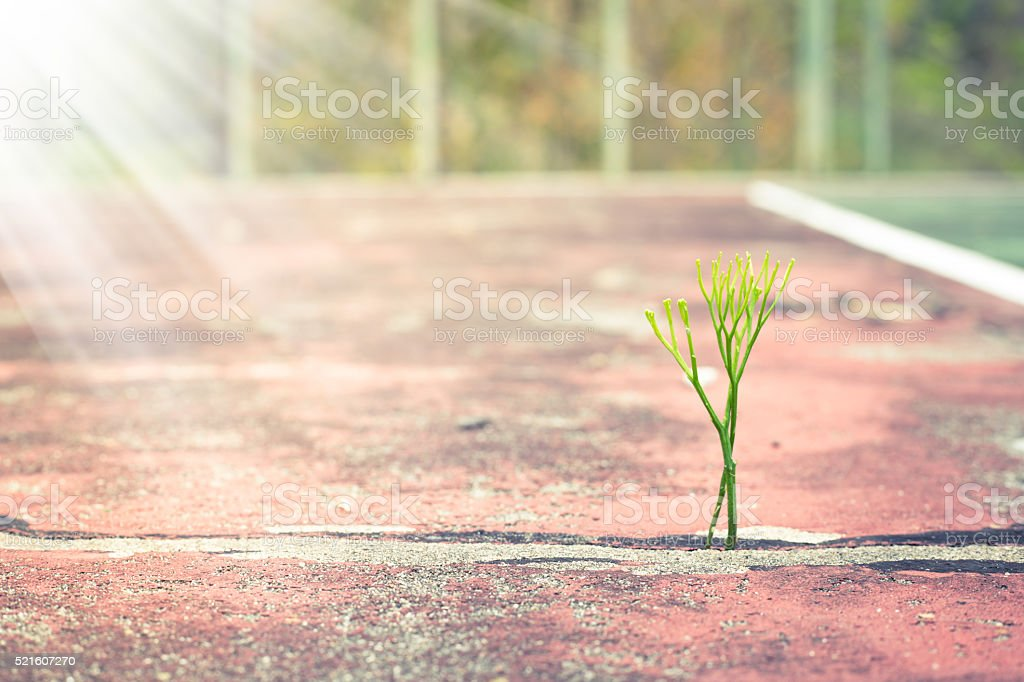 Little plants sprout grows on ground with sunlight stock photo