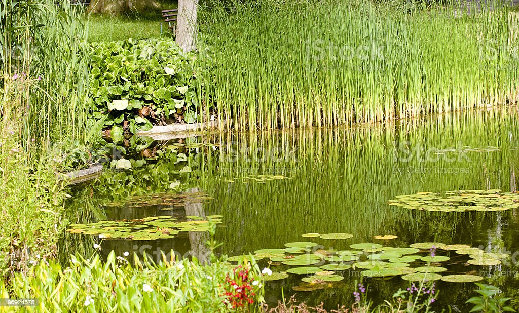 Little Pond royalty-free stock photo