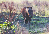 Little pony is grazing in the colourfull autumn sun