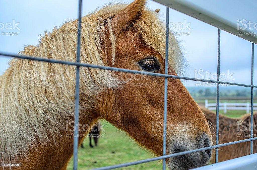 Little pony foto royalty-free