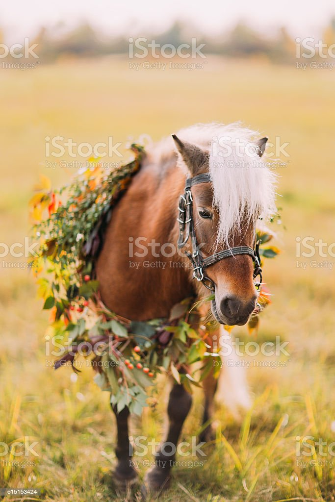 Little pony with flowers on the sunny green field stock photo