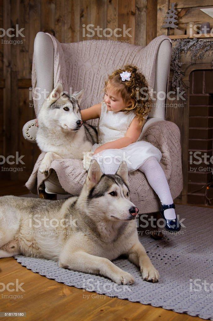 Little princess with Husky stock photo