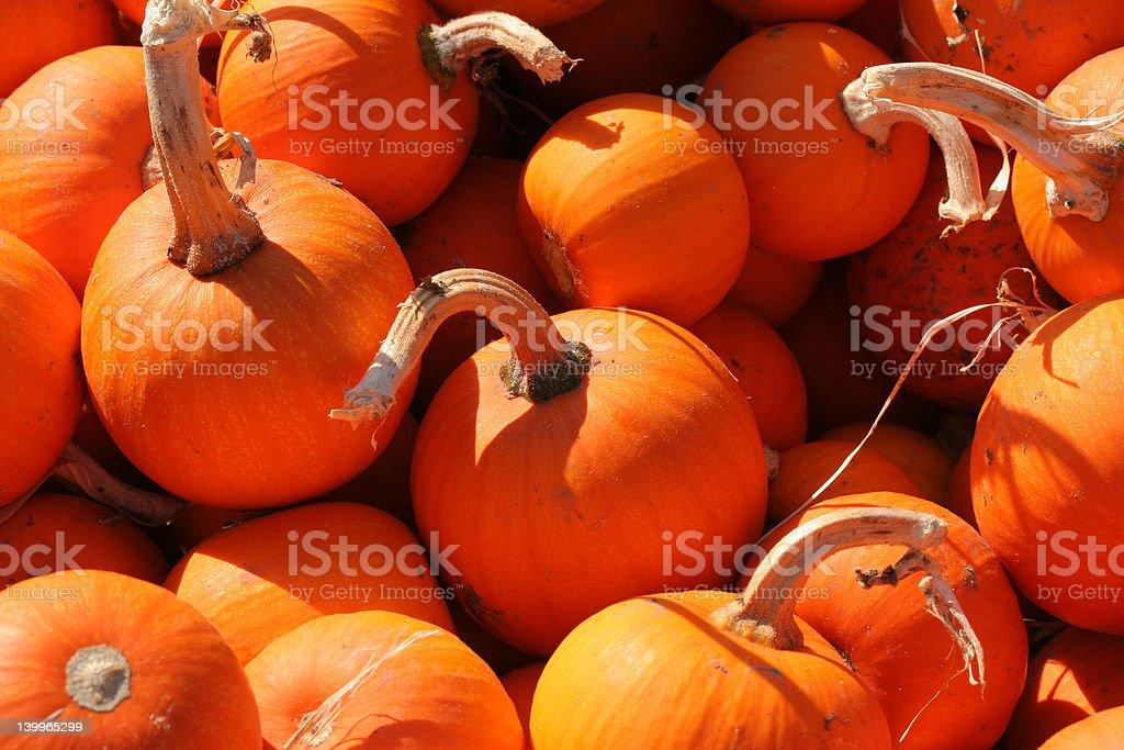 Little Pumpkins stock photo