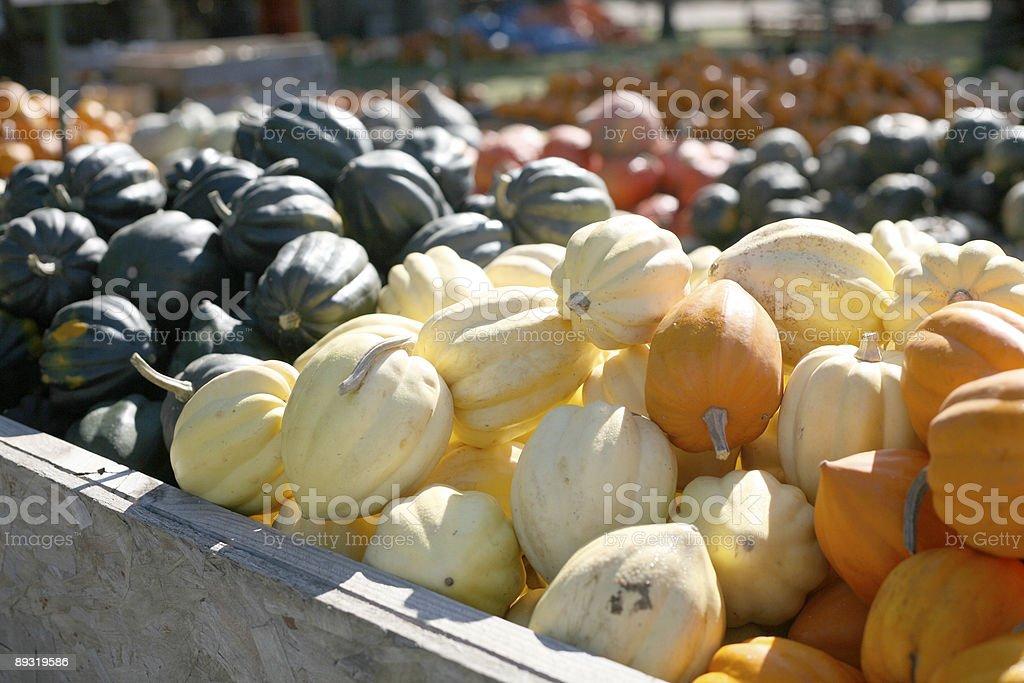 Little pumpkins! royalty-free stock photo