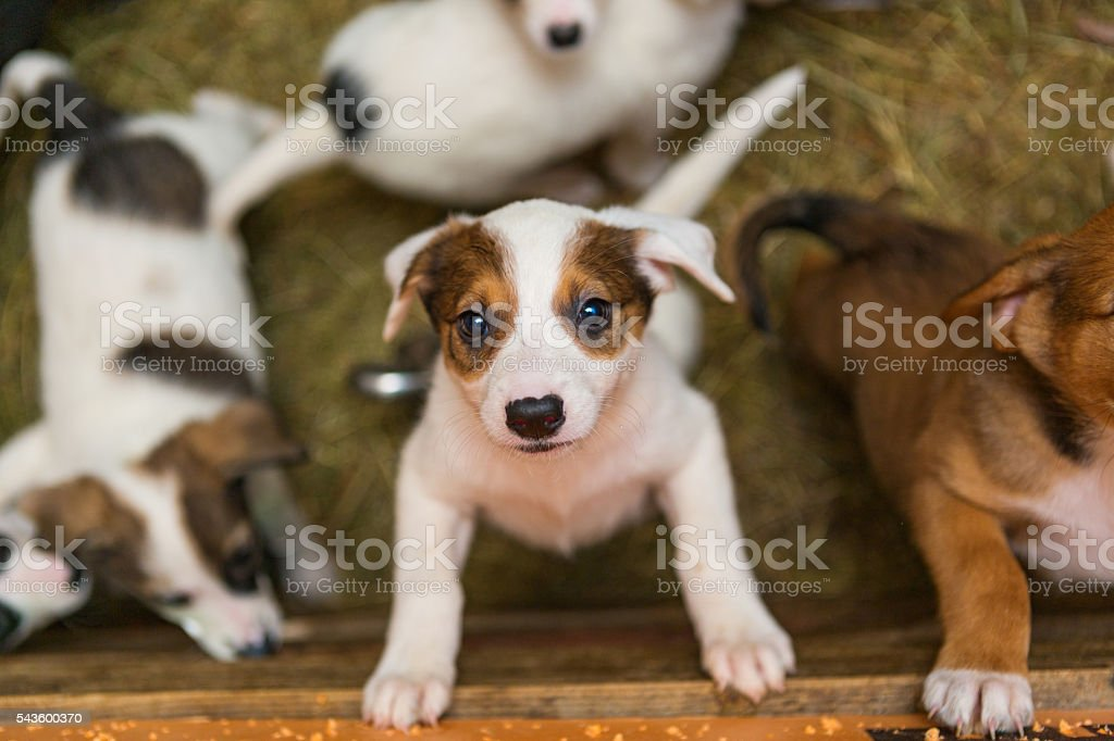 Little puppies in the stock photo