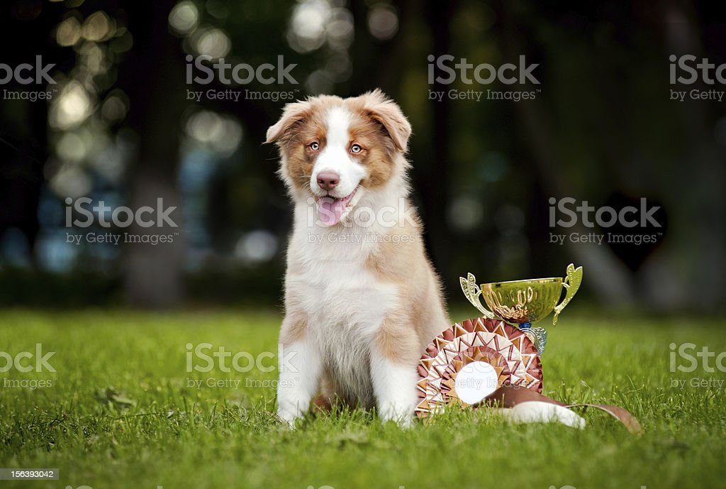 little puppy and his award cup stock photo
