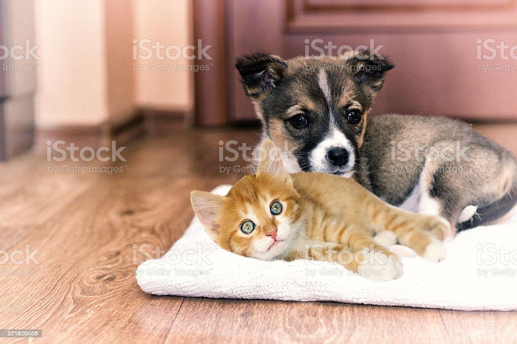 little puppy and kitten stock photo
