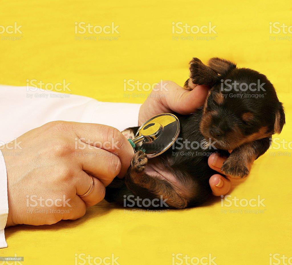 little puppy stock photo