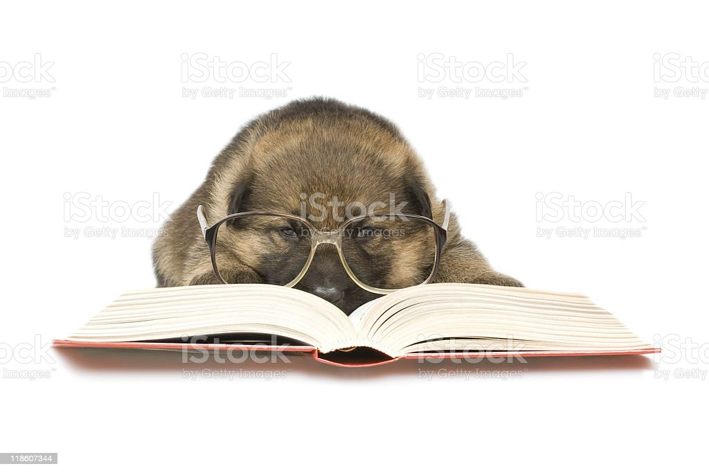 little puppy reading the book stock photo