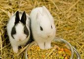 Little rabbit at food bowl