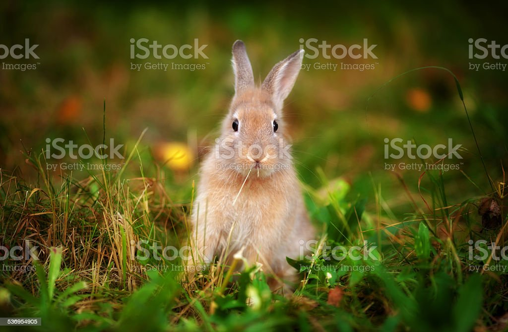 little rabbit in the grass stock photo