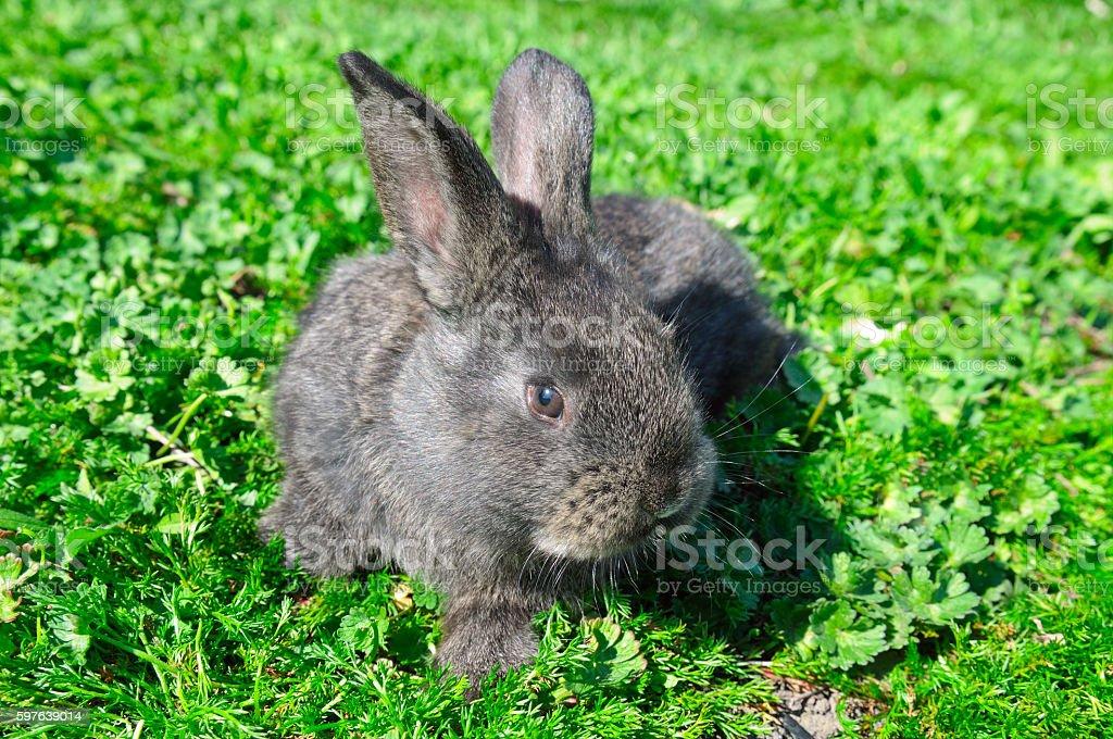 little rabbit on green grass stock photo