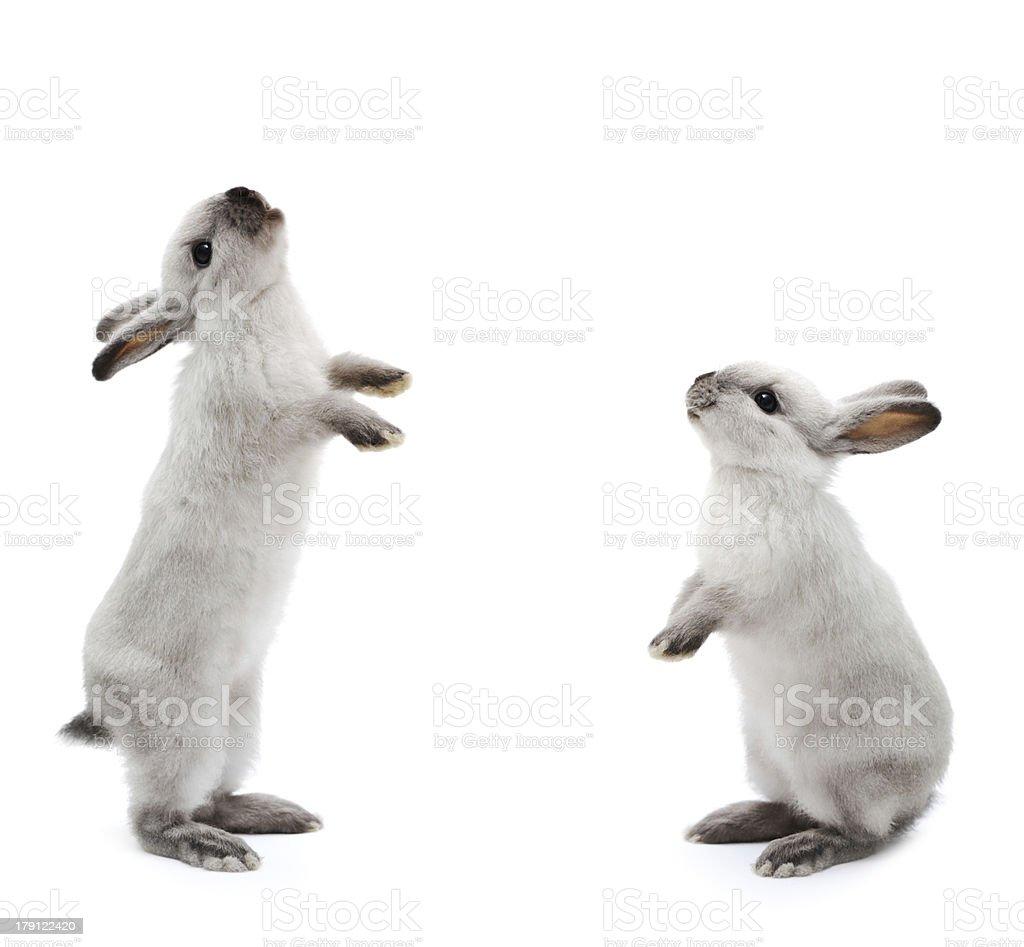 Little rabbit on white stock photo