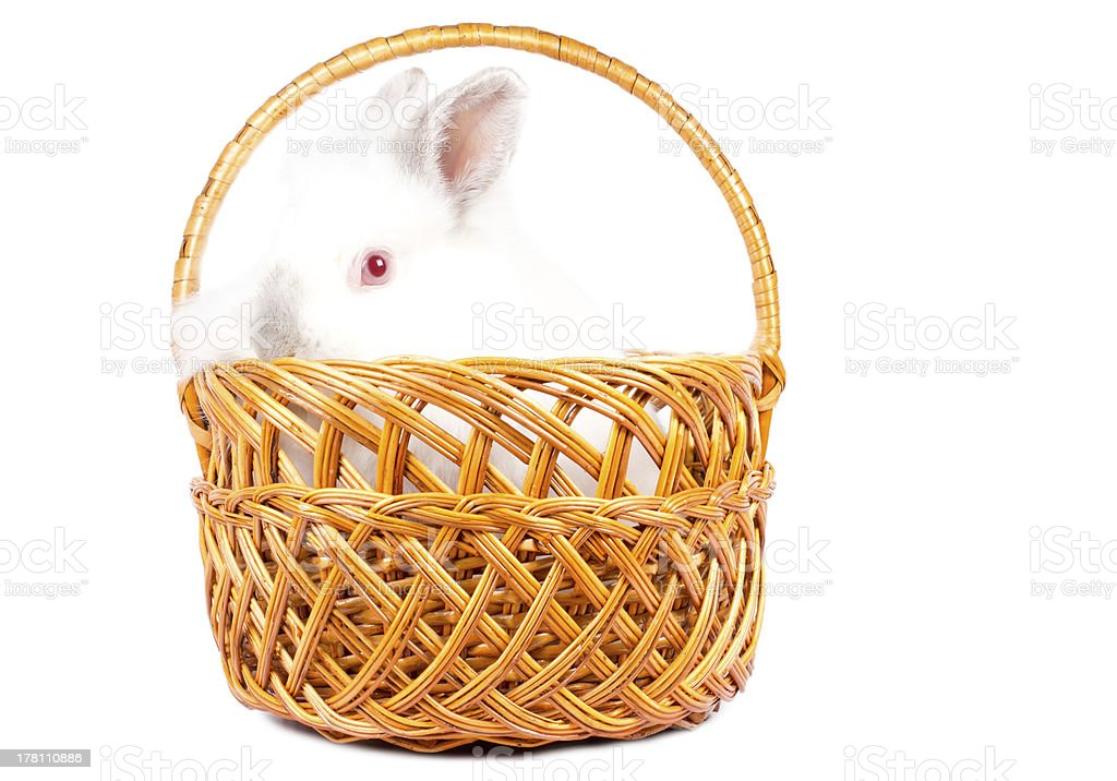 Little rabbit peering over a basket royalty-free stock photo