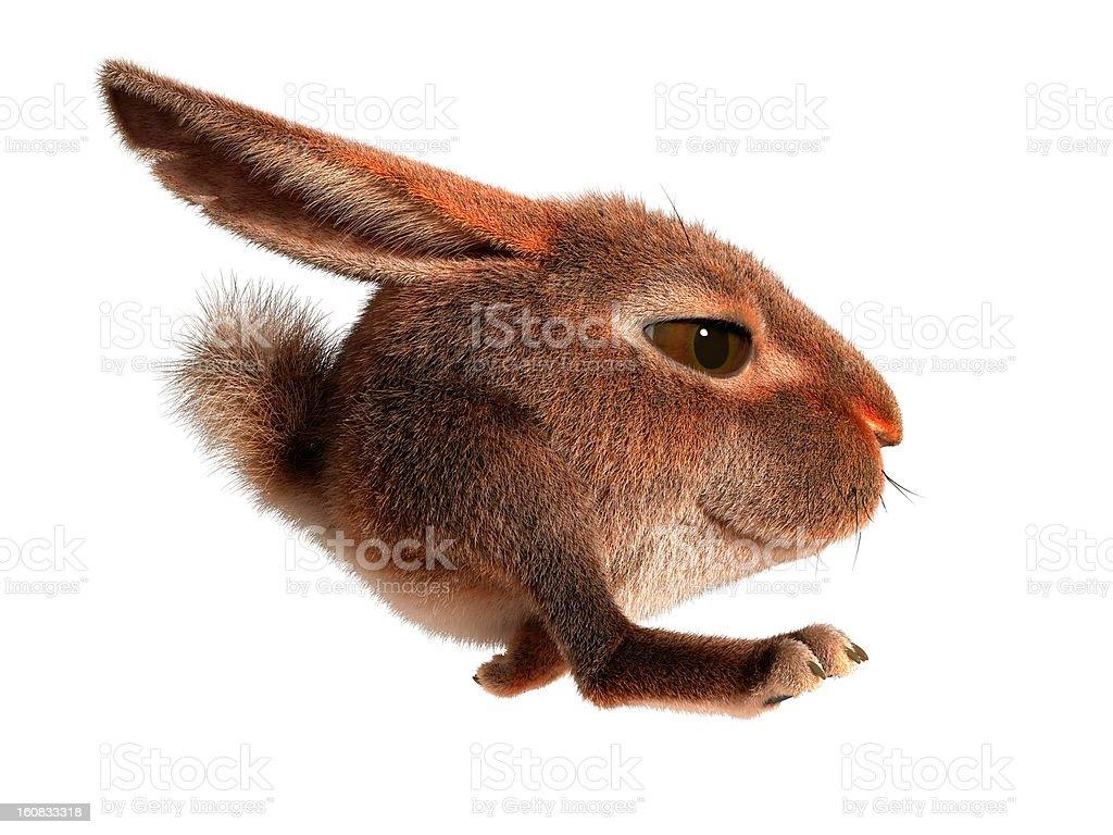 Little rabbit runs stock photo
