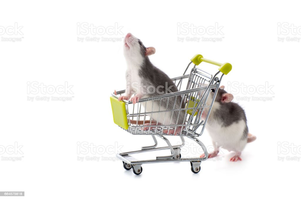 Little rat rolls his kinsman in the purchasing cart. stock photo