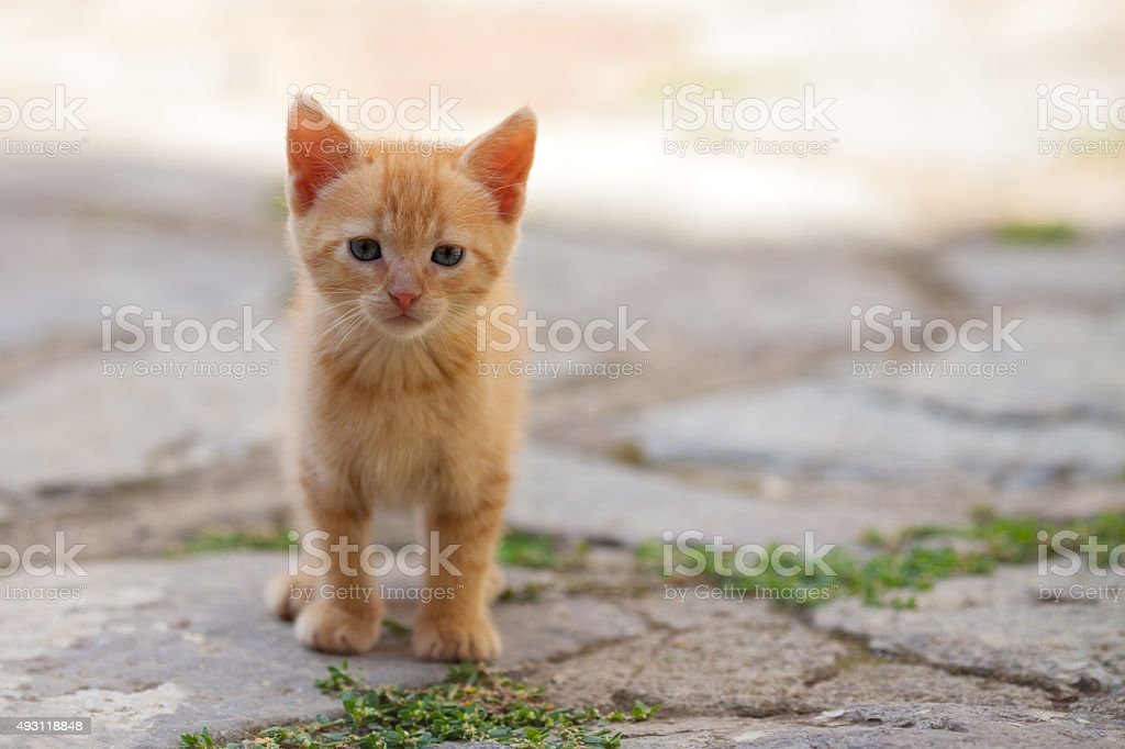 Little red cat stock photo