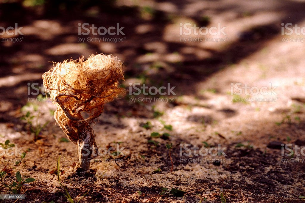 Little root tree stock photo