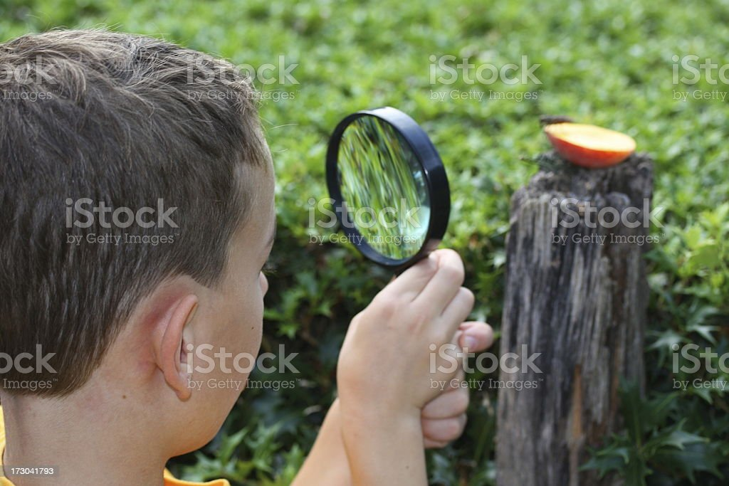 Little Scientist - boy is looking through a magnifying glass royalty-free stock photo
