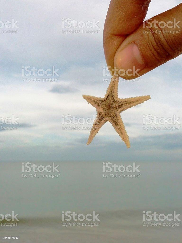 Little Seastar in the sky stock photo