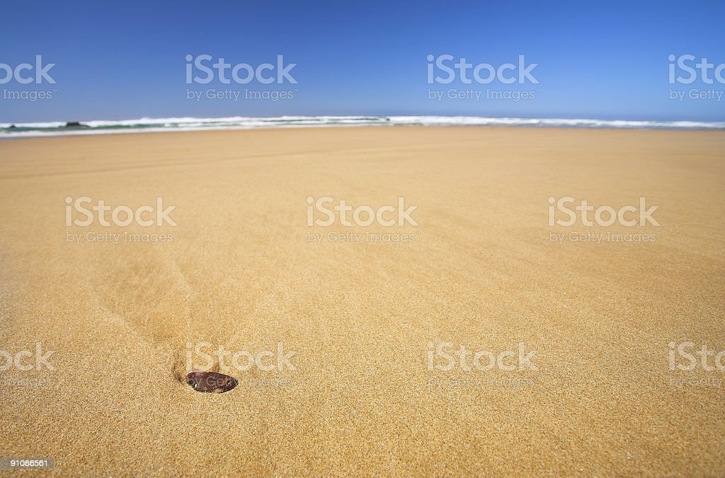 Little shell on a flat beach with Blue Sky royalty-free stock photo