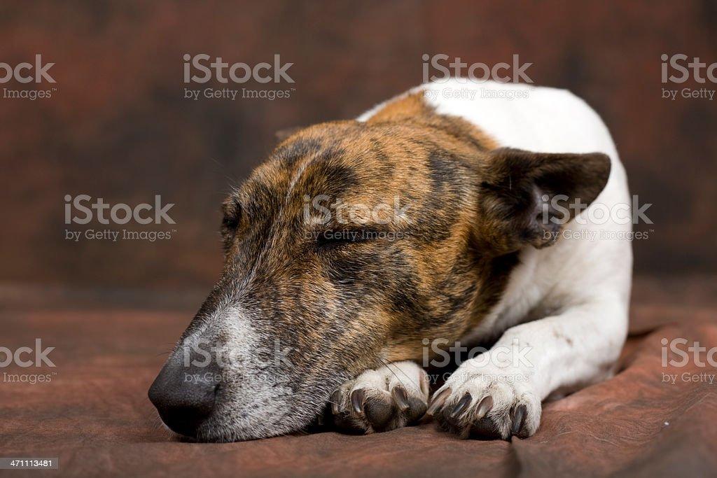 Little Sleeping Dog stock photo