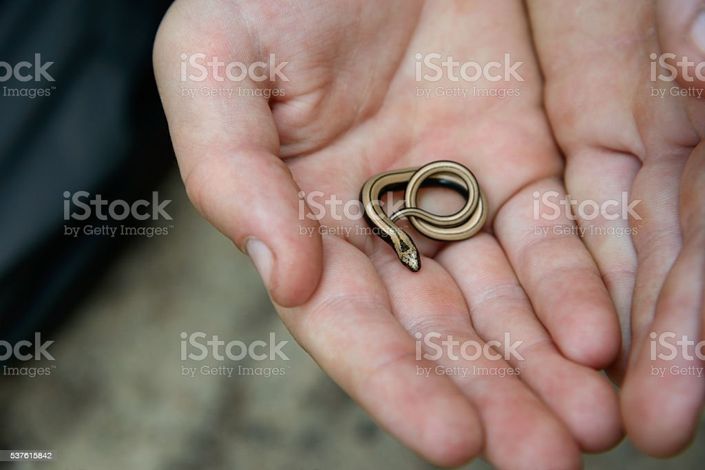 little slow worm on palm stock photo