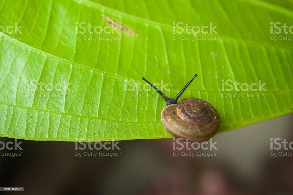 Little snail on green leaf stock photo