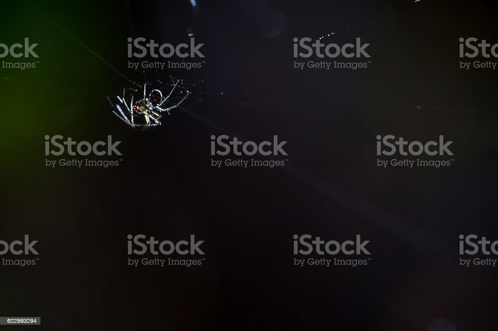 little spider stock photo