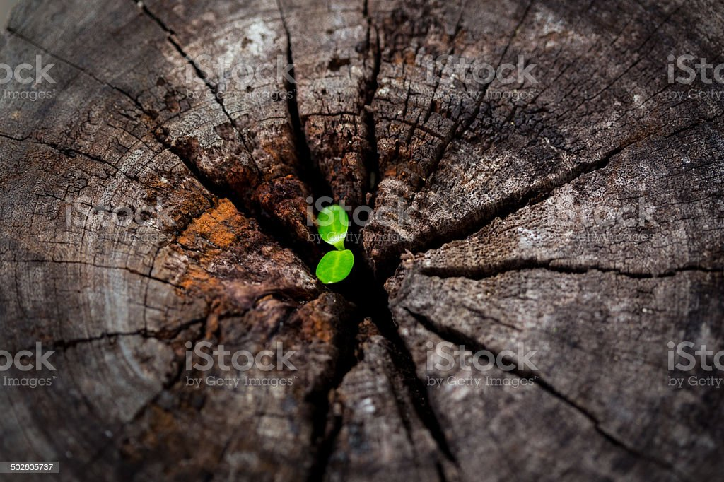 little sprout in the old log stock photo