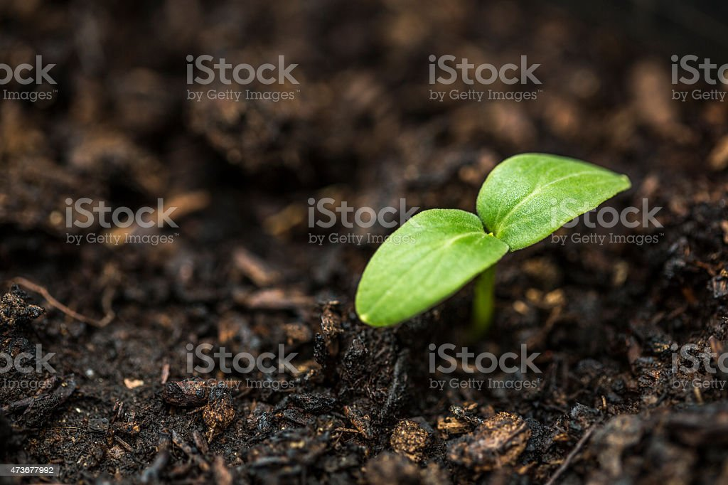 Little sprouts stock photo