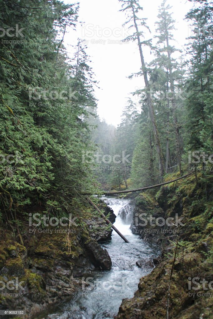 Little stream through the primeval forest stock photo