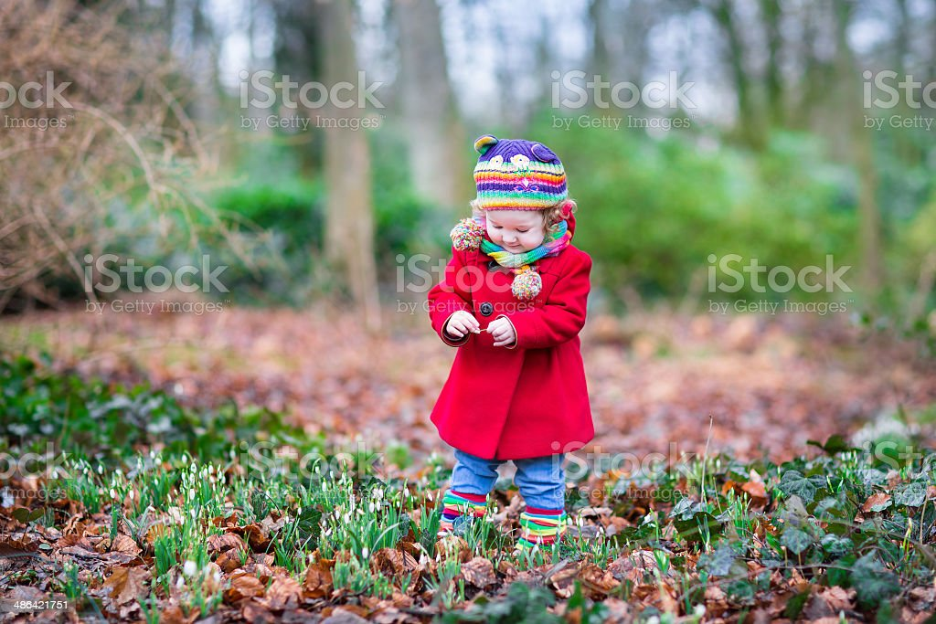 Little toddler girl in red coat with beautiful snowdrop flowers stock photo