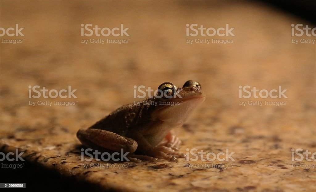Little toes. Big eyes. stock photo