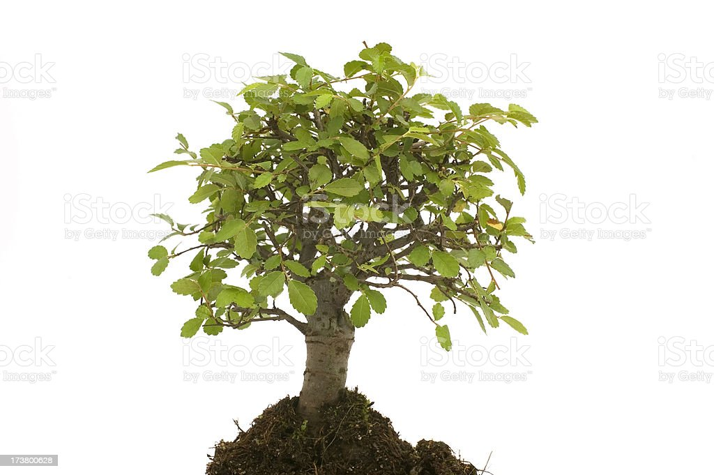 little tree royalty-free stock photo