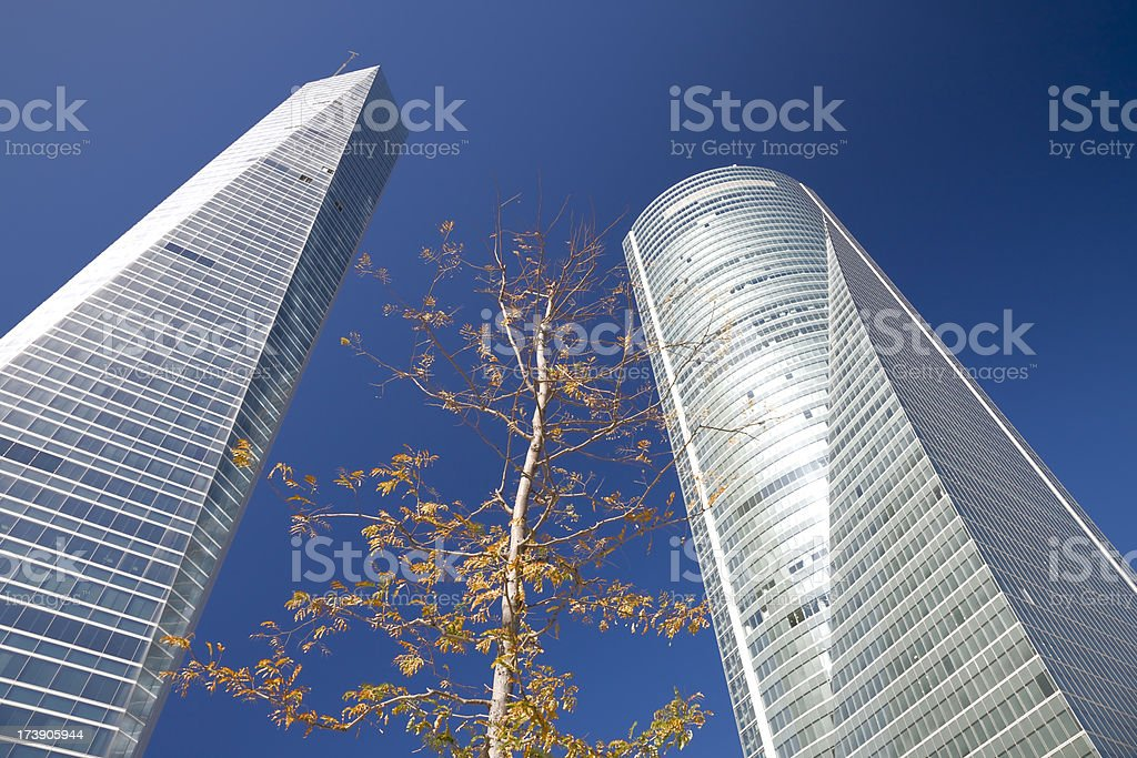 Little tree surrounded by two giant skyscrapers royalty-free stock photo
