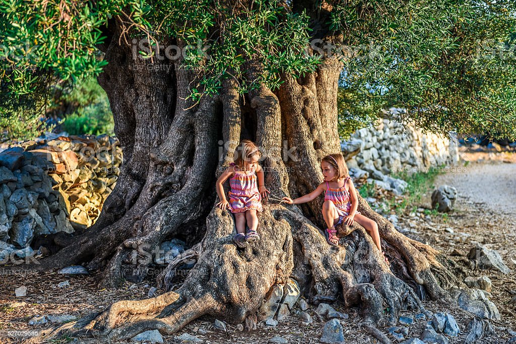 Little Twin Girls are sitting and ancient old olive tree stock photo