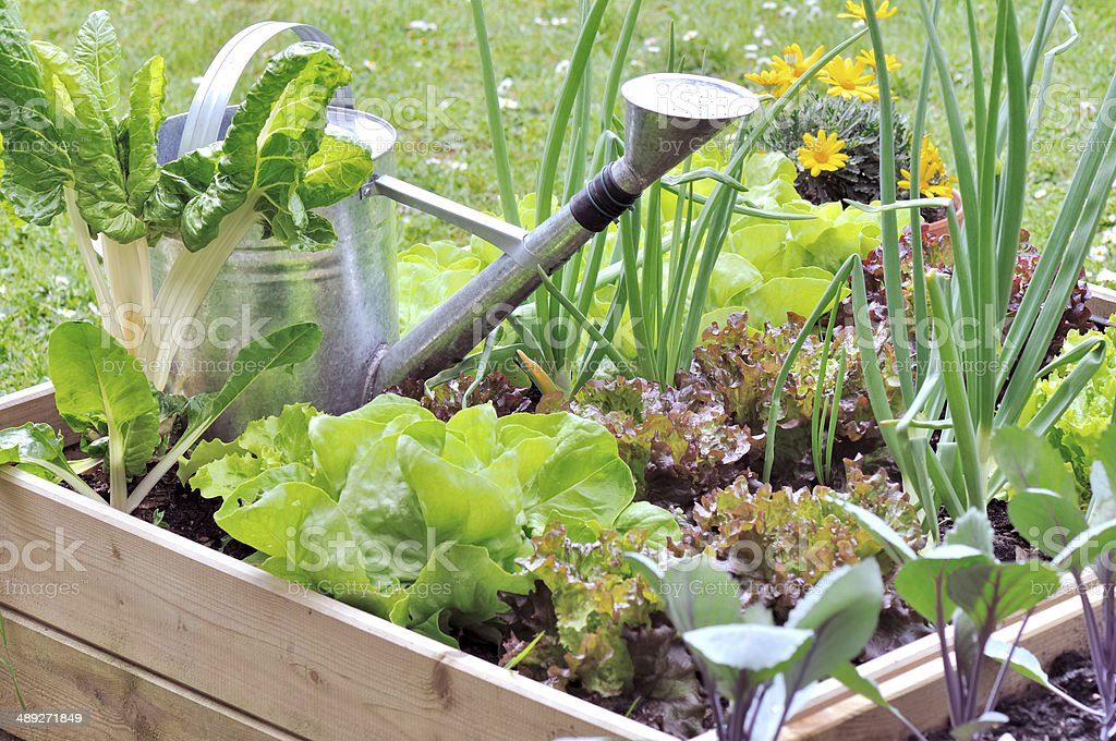little vegetable patch stock photo