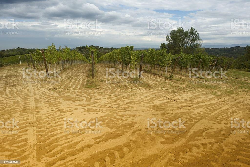 Little Vineyard royalty-free stock photo