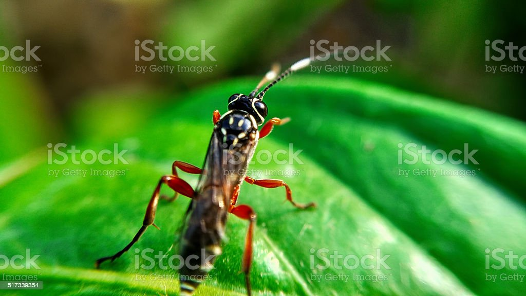 Little wasp stock photo