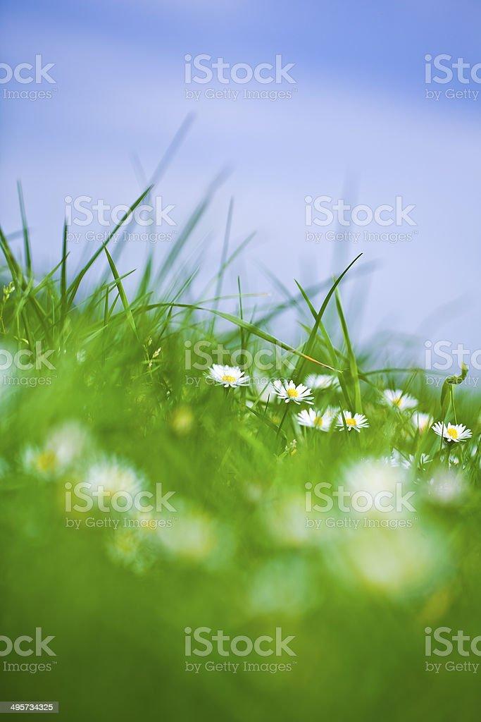 Little white flowers stock photo