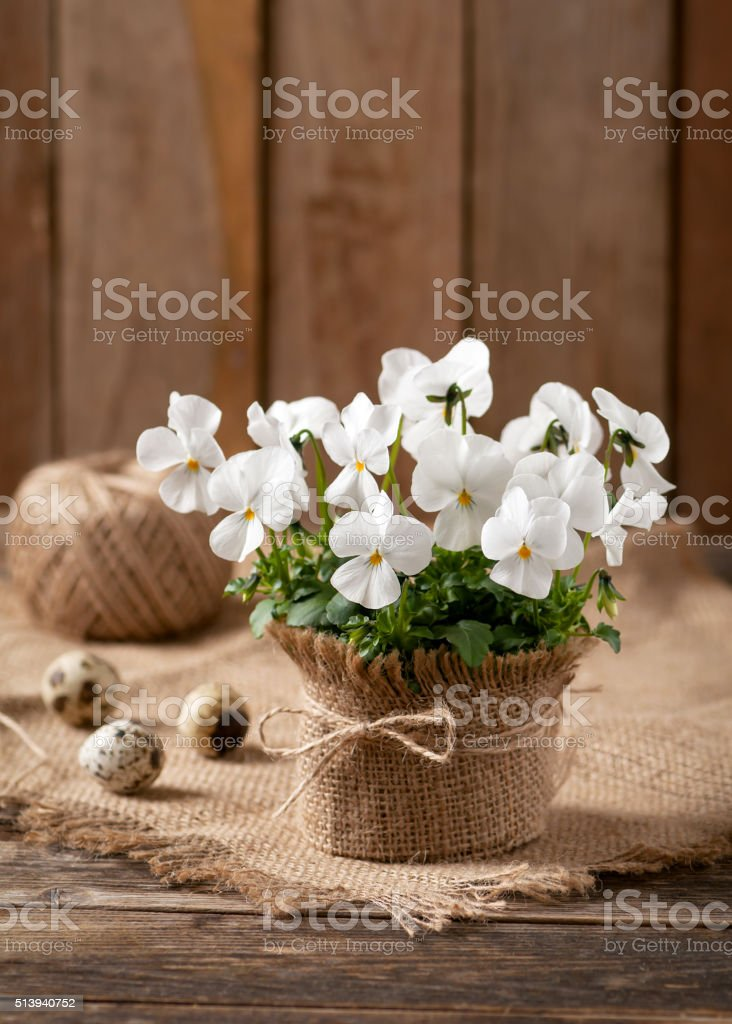 Little white pansies in flower pot on rustic table. stock photo