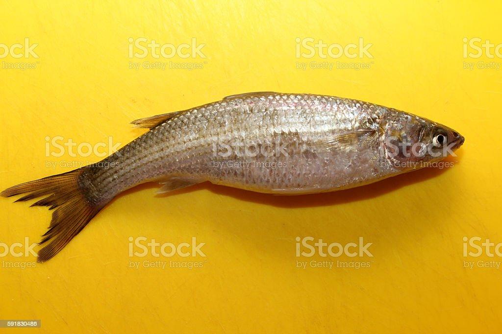 Little_Fish stock photo