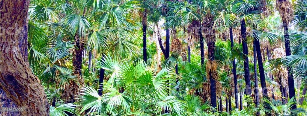 Littoral Rainforest, Pelican Nature Reserve, NSW, Australia. stock photo